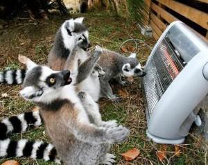 lemur heater
