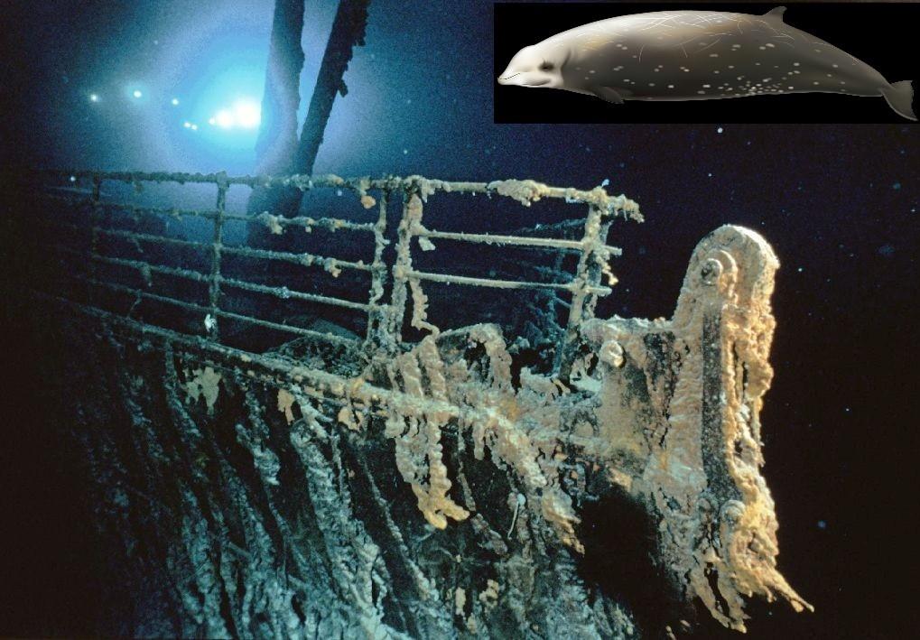 titanic whale trivia